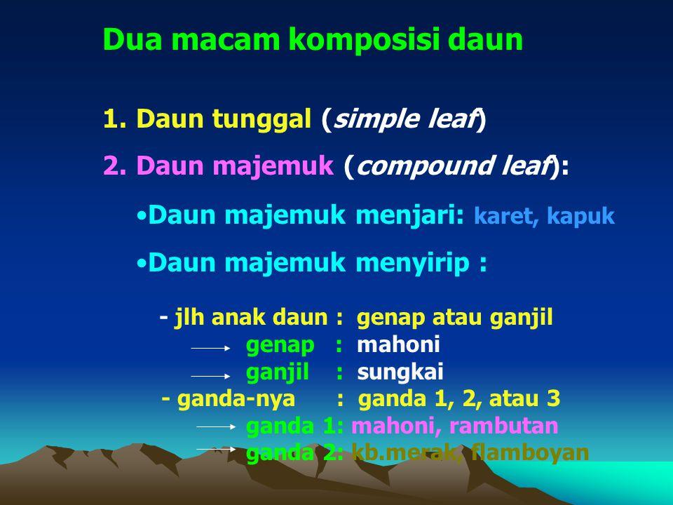 Dua macam komposisi daun 1.Daun tunggal (simple leaf) 2.Daun majemuk (compound leaf): - jlh anak daun : genap atau ganjil genap : mahoni ganjil : sungkai - ganda-nya : ganda 1, 2, atau 3 ganda 1: mahoni, rambutan ganda 2: kb.merak, flamboyan Daun majemuk menjari: karet, kapuk Daun majemuk menyirip :