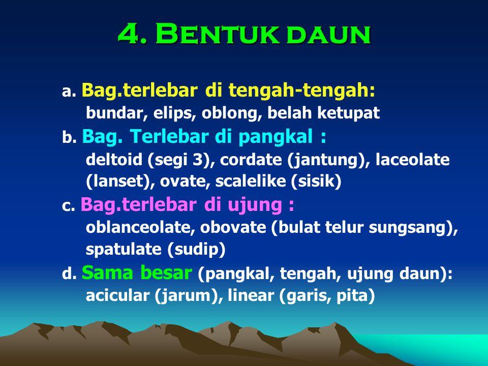 4.Bentuk daun a. Bag.terlebar di tengah-tengah: bundar, elips, oblong, belah ketupat b.