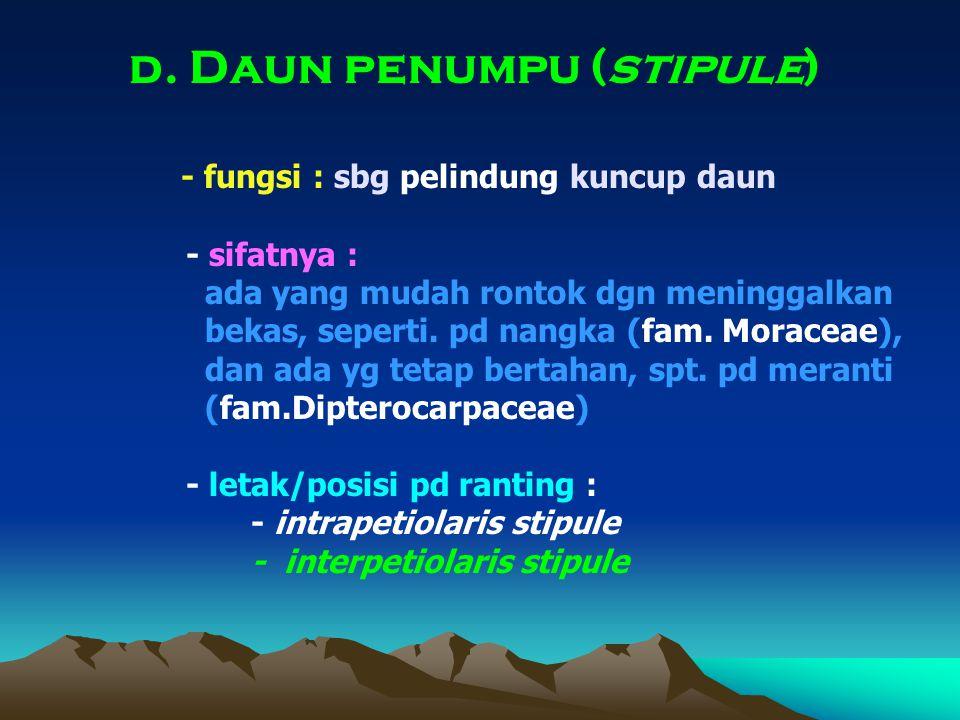 d. Daun penumpu (stipule) - fungsi : sbg pelindung kuncup daun - sifatnya : ada yang mudah rontok dgn meninggalkan bekas, seperti. pd nangka (fam. Mor