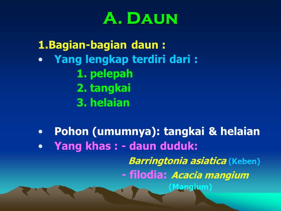 A. Daun 1.Bagian-bagian daun : Yang lengkap terdiri dari : 1. pelepah 2. tangkai 3. helaian Pohon (umumnya): tangkai & helaian Yang khas : - daun dudu