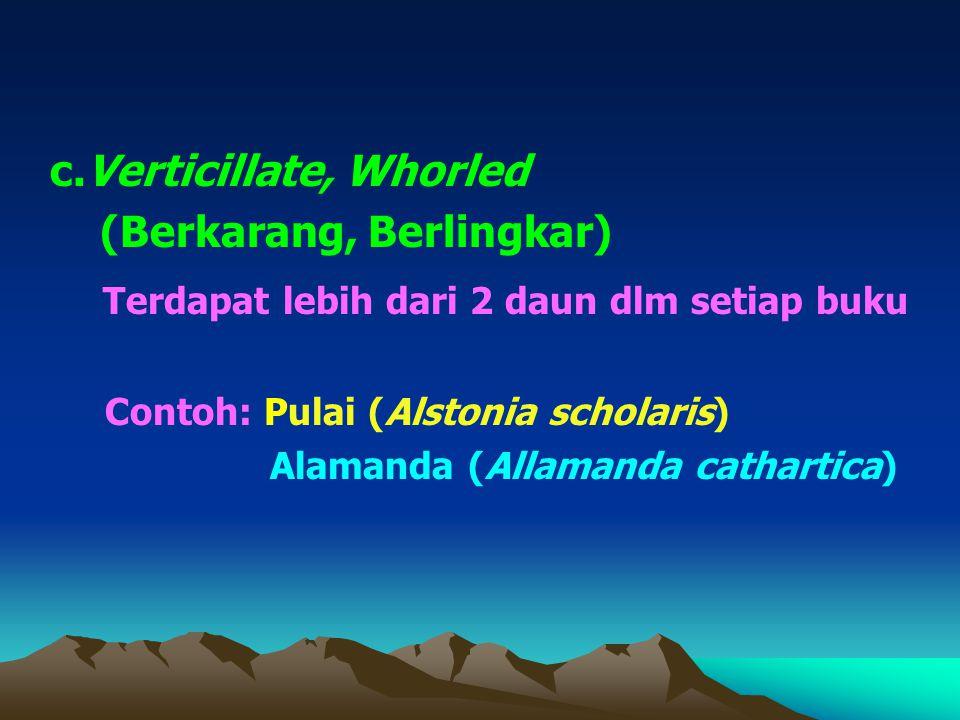 c.Verticillate, Whorled (Berkarang, Berlingkar) Terdapat lebih dari 2 daun dlm setiap buku Contoh: Pulai (Alstonia scholaris) Alamanda (Allamanda cathartica)
