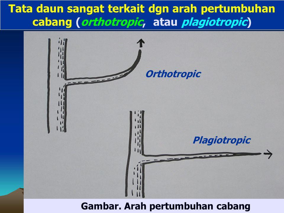 Orthotropic Plagiotropic Gambar.
