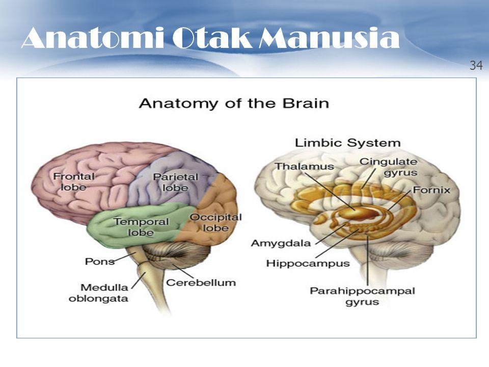 OTAK MANUSIA 34 Anatomi Otak Manusia