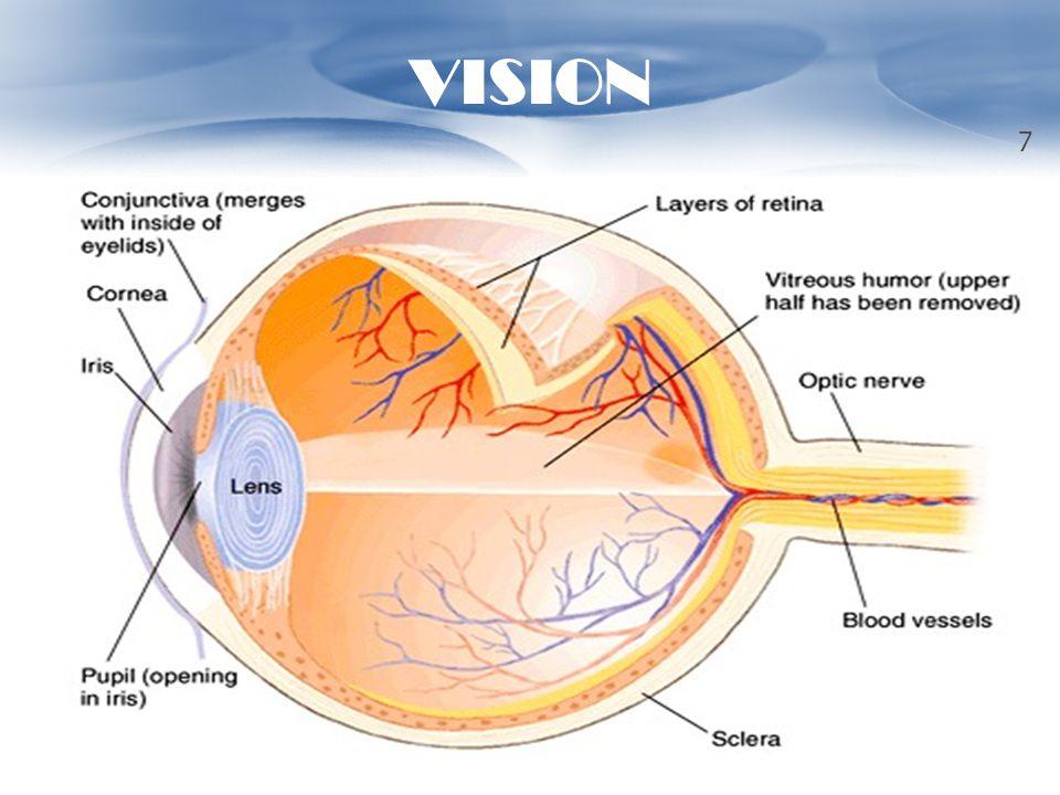 VISION 7
