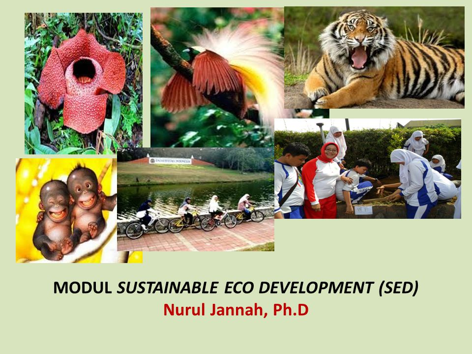 IMPLEMENTATION OF Environmental Education (EE) IN INDONESIA FORMAL 1.