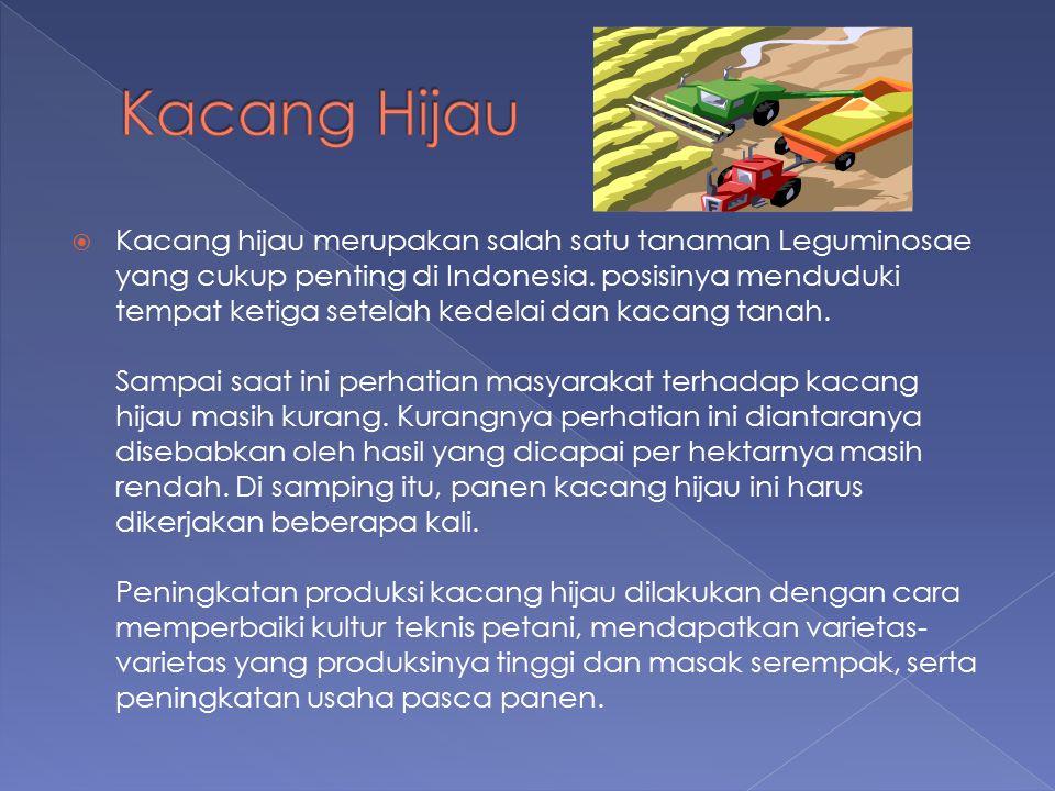  Kacang hijau merupakan salah satu tanaman Leguminosae yang cukup penting di Indonesia. posisinya menduduki tempat ketiga setelah kedelai dan kacang