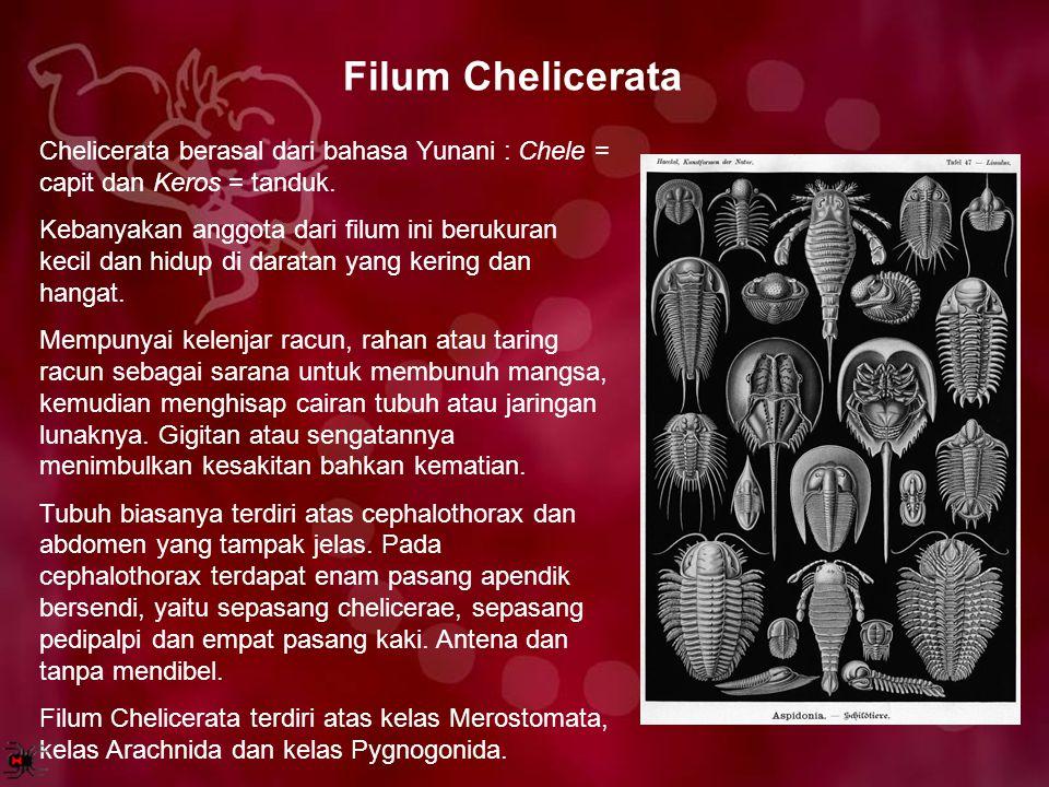 Filum Chelicerata Chelicerata berasal dari bahasa Yunani : Chele = capit dan Keros = tanduk. Kebanyakan anggota dari filum ini berukuran kecil dan hid