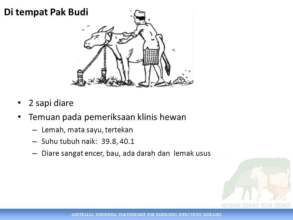 AUSTRALIA INDONESIA PARTNERSHIP FOR EMERGING INFECTIOUS DISEASES 2 sapi diare Temuan pada pemeriksaan klinis hewan – Lemah, mata sayu, tertekan – Suhu tubuh naik: 39.8, 40.1 – Diare sangat encer, bau, ada darah dan lemak usus Di tempat Pak Budi