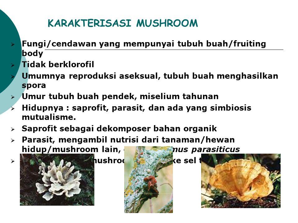 KARAKTERISASI MUSHROOM  Fungi/cendawan yang mempunyai tubuh buah/fruiting body  Tidak berklorofil  Umumnya reproduksi aseksual, tubuh buah menghasi