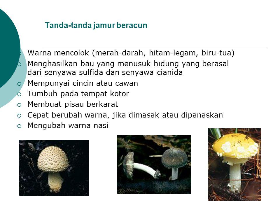 Tanda-tanda jamur beracun  Warna mencolok (merah-darah, hitam-legam, biru-tua)  Menghasilkan bau yang menusuk hidung yang berasal dari senyawa sulfi