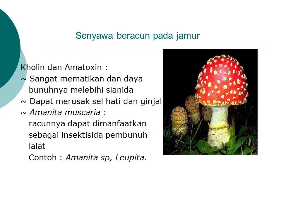 Senyawa beracun pada jamur  Kholin dan Amatoxin : ~ Sangat mematikan dan daya bunuhnya melebihi sianida ~ Dapat merusak sel hati dan ginjal. ~ Amanit