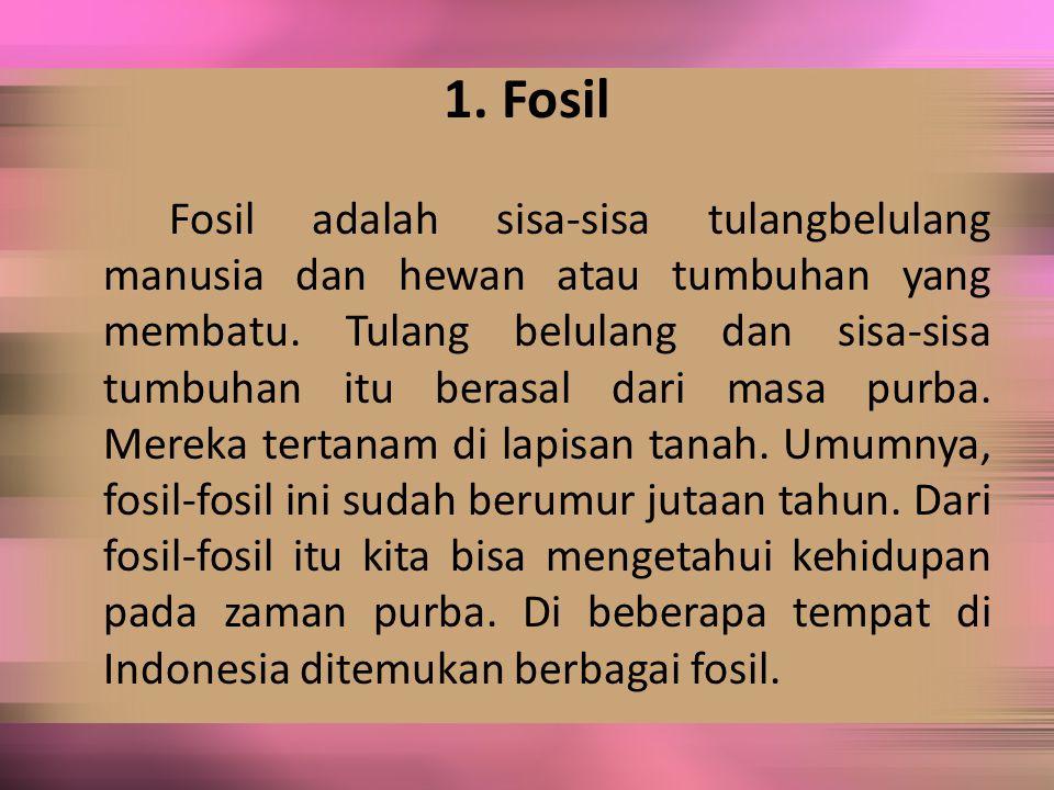 1. Fosil Fosil adalah sisa-sisa tulangbelulang manusia dan hewan atau tumbuhan yang membatu. Tulang belulang dan sisa-sisa tumbuhan itu berasal dari m
