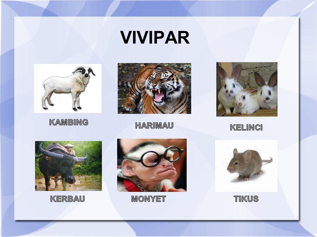 VIVIPAR