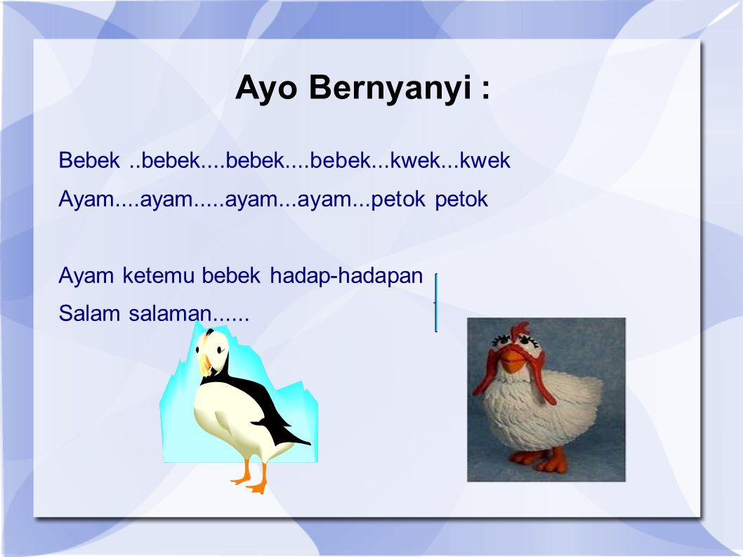 Ayo Bernyanyi : Bebek..bebek....bebek....bebek...kwek...kwek Ayam....ayam.....ayam...ayam...petok petok Ayam ketemu bebek hadap-hadapan Salam salaman.