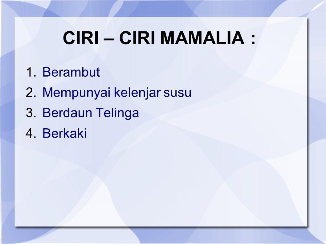 CIRI – CIRI MAMALIA : 1.Berambut 2.Mempunyai kelenjar susu 3.Berdaun Telinga 4.Berkaki