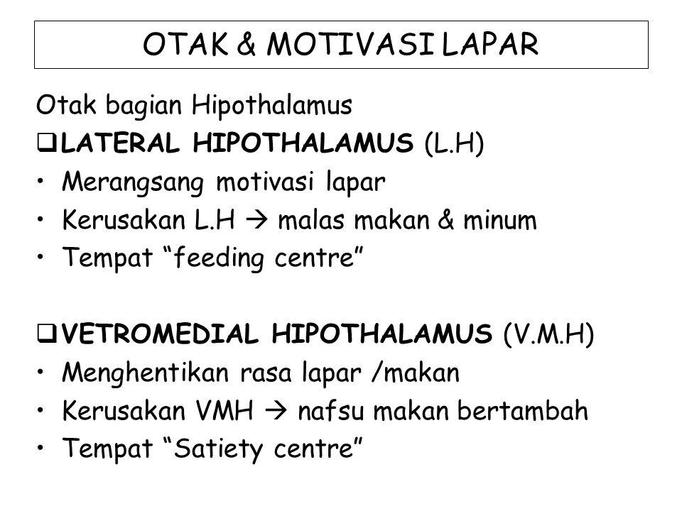 """OTAK & MOTIVASI LAPAR Otak bagian Hipothalamus  LATERAL HIPOTHALAMUS (L.H) Merangsang motivasi lapar Kerusakan L.H  malas makan & minum Tempat """"feed"""