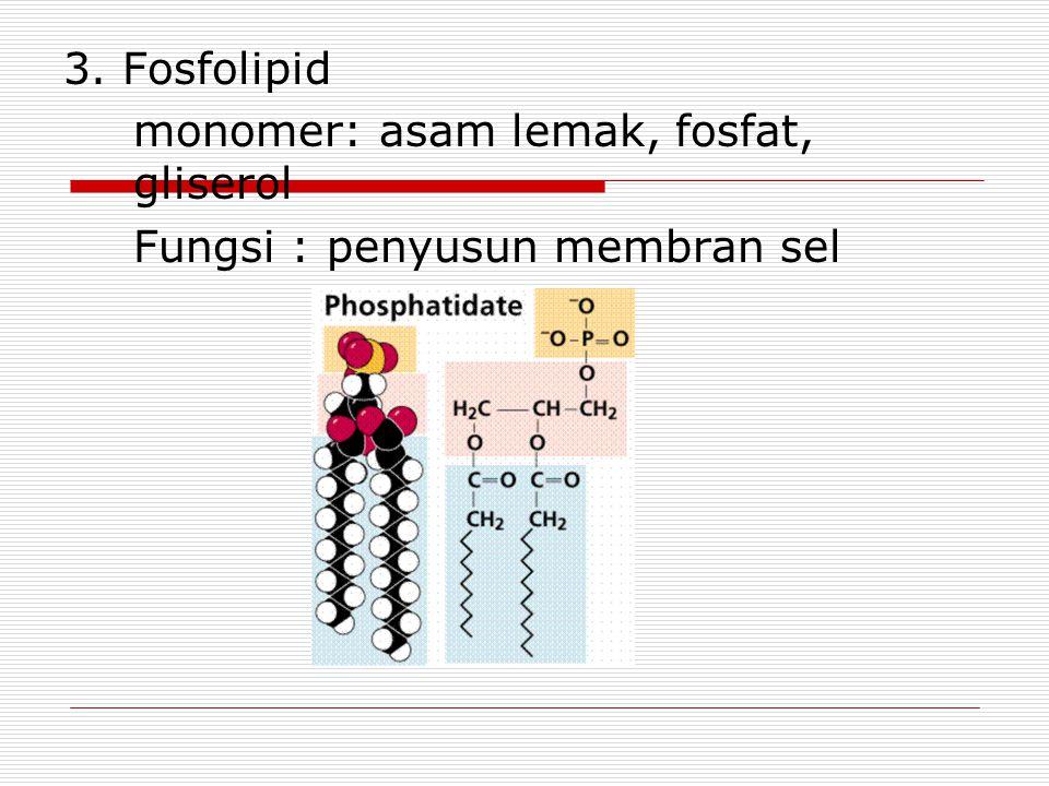 3. Fosfolipid monomer: asam lemak, fosfat, gliserol Fungsi : penyusun membran sel