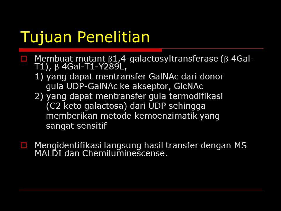 Tujuan Penelitian  Membuat mutant 1,4-galactosyltransferase ( 4Gal- T1),  4Gal-T1-Y289L, 1) yang dapat mentransfer GalNAc dari donor gula UDP-GalN