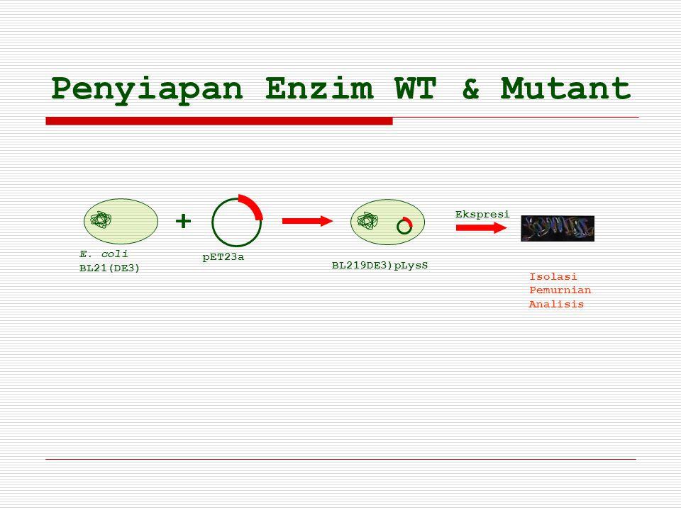 pET23a Penyiapan Enzim WT & Mutant E. coli BL21(DE3) Ekspresi Isolasi Pemurnian Analisis BL219DE3)pLysS