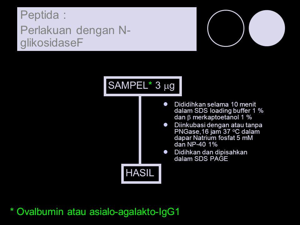 SAMPEL* 3  g Dididihkan selama 10 menit dalam SDS loading buffer 1 % dan  merkaptoetanol 1 % Diinkubasi dengan atau tanpa PNGase,16 jam 37 o C dalam