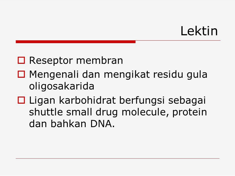 Lektin  Reseptor membran  Mengenali dan mengikat residu gula oligosakarida  Ligan karbohidrat berfungsi sebagai shuttle small drug molecule, protei