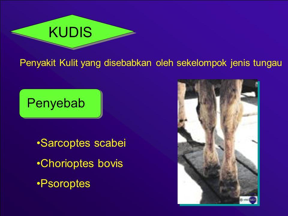 Pengendalian Pencegahan 1.Menjaga Kebersihan Kulit dan Kesehatan tubuh hewan 2.Mencegah terjadinya kontak langsung antara penderita dengan hewan sehat