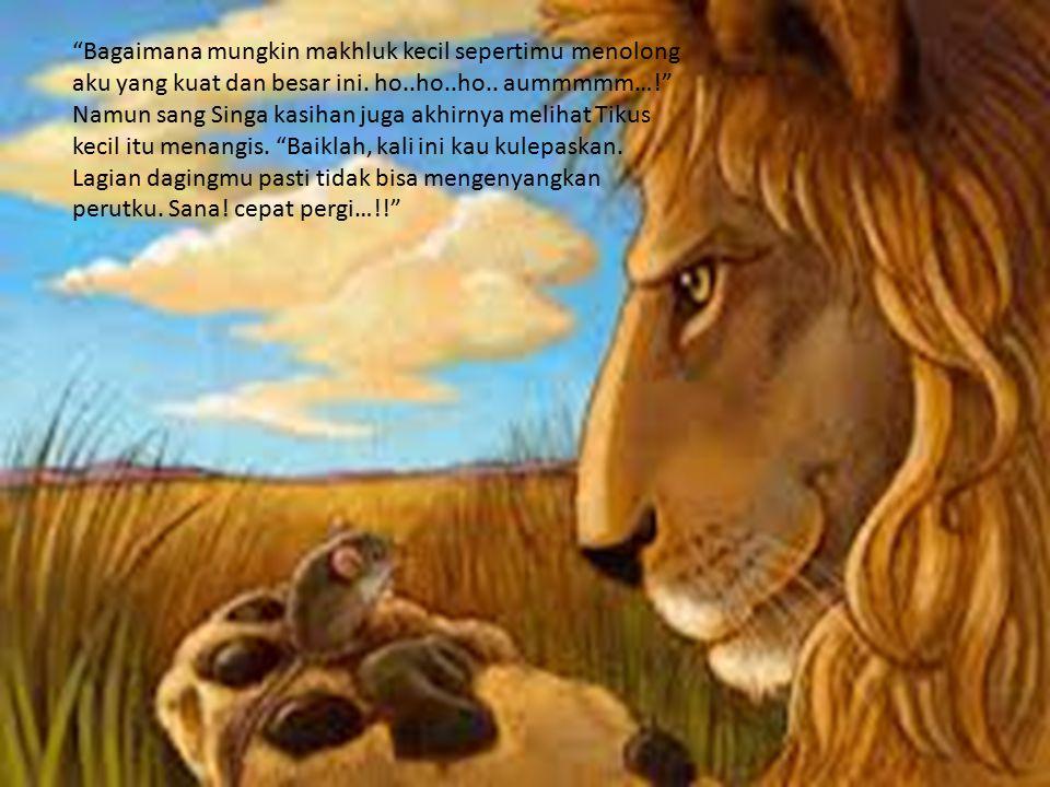 """""""Bagaimana mungkin makhluk kecil sepertimu menolong aku yang kuat dan besar ini. ho..ho..ho.. aummmmm…!"""" Namun sang Singa kasihan juga akhirnya meliha"""