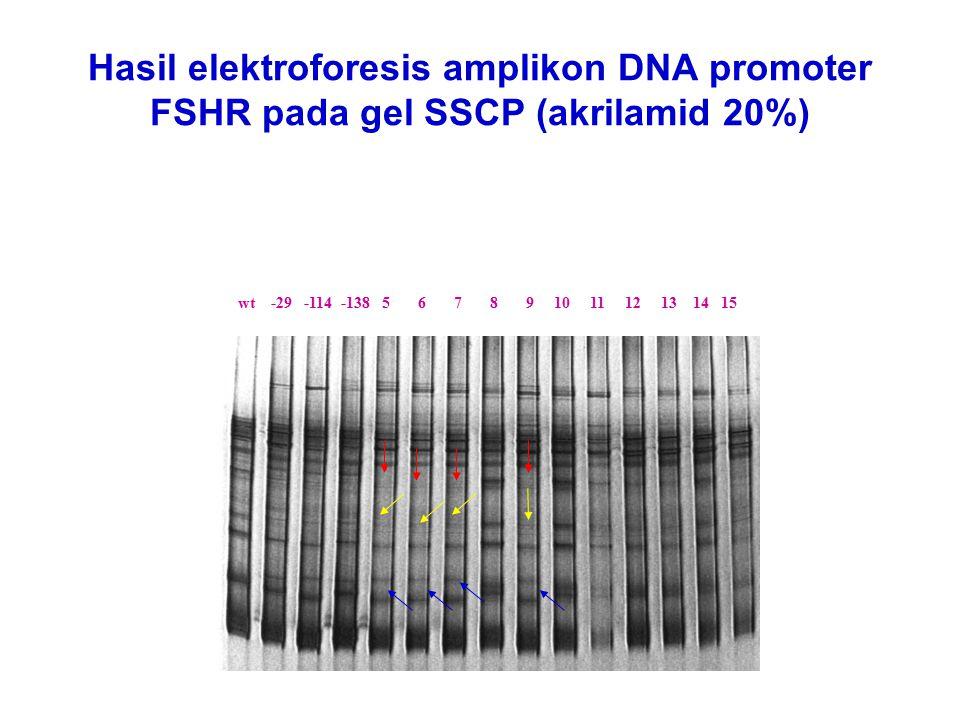 Hasil elektroforesis amplikon DNA promoter FSHR pada gel SSCP (akrilamid 20%) wt -29 -114 -138 5 6 7 8 9 10 11 12 13 14 15