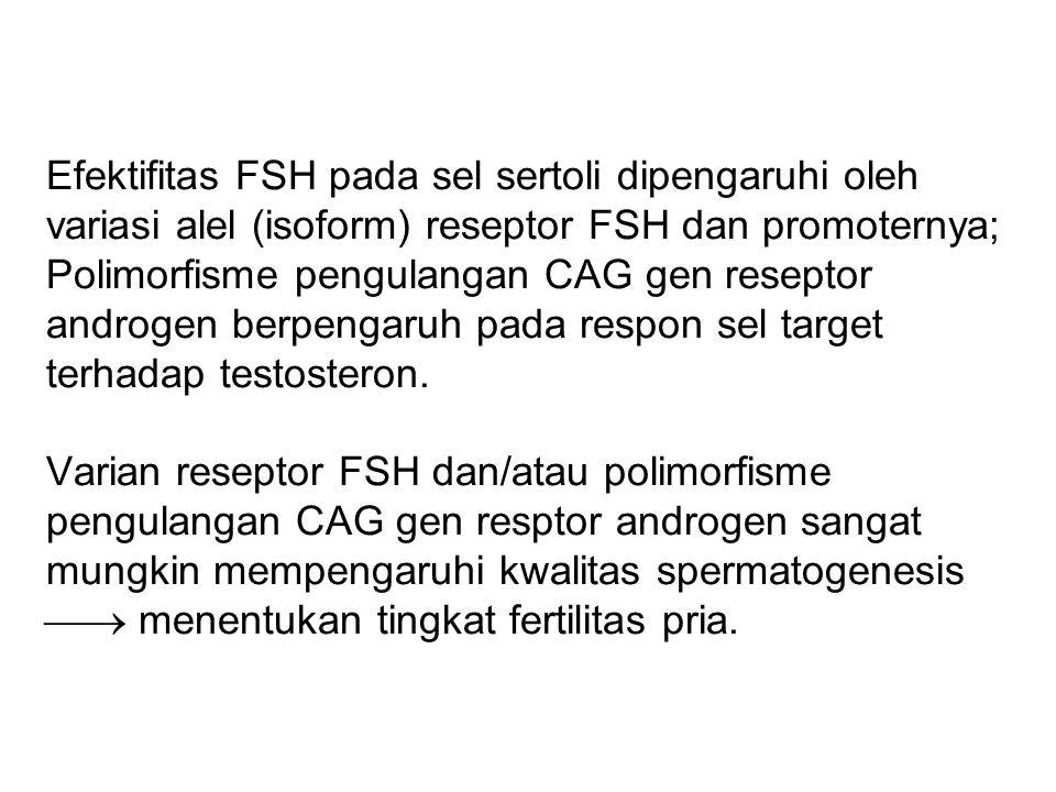Efektifitas FSH pada sel sertoli dipengaruhi oleh variasi alel (isoform) reseptor FSH dan promoternya; Polimorfisme pengulangan CAG gen reseptor andro