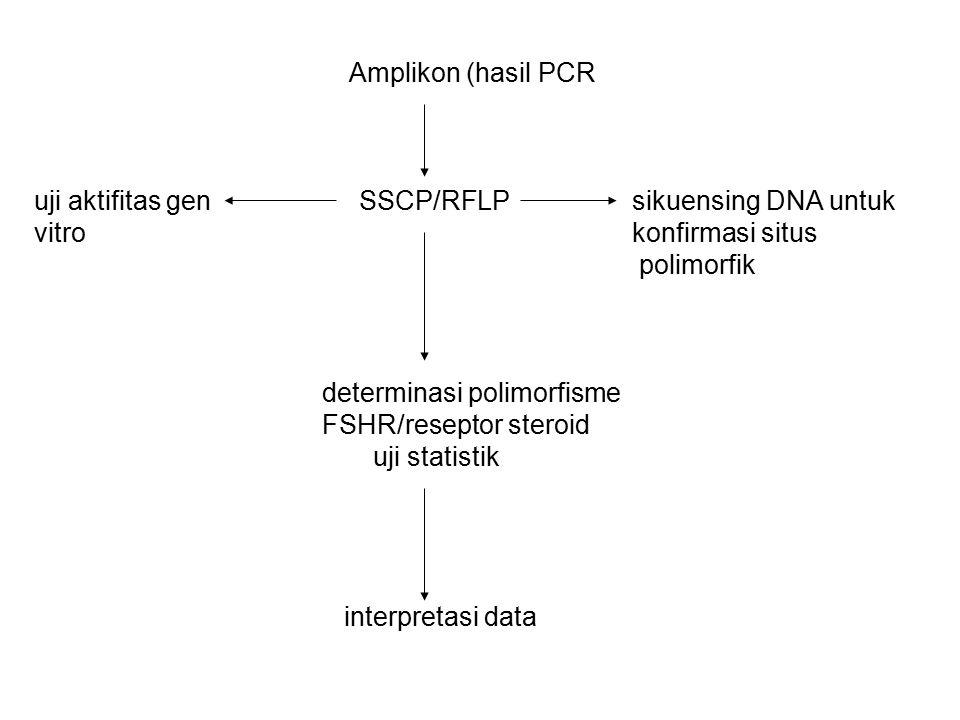 Amplikon (hasil PCR uji aktifitas gen SSCP/RFLP sikuensing DNA untuk vitro konfirmasi situs polimorfik determinasi polimorfisme FSHR/reseptor steroid