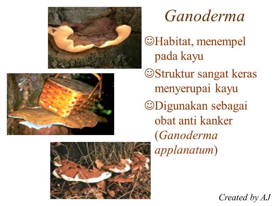 Ganoderma Habitat, menempel pada kayu Struktur sangat keras menyerupai kayu Digunakan sebagai obat anti kanker (Ganoderma applanatum) Created by AJ