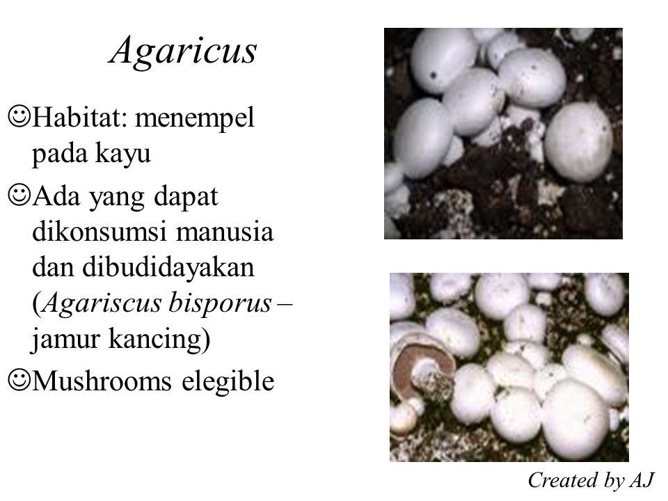 Agaricus Habitat: menempel pada kayu Ada yang dapat dikonsumsi manusia dan dibudidayakan (Agariscus bisporus – jamur kancing) Mushrooms elegible Created by AJ