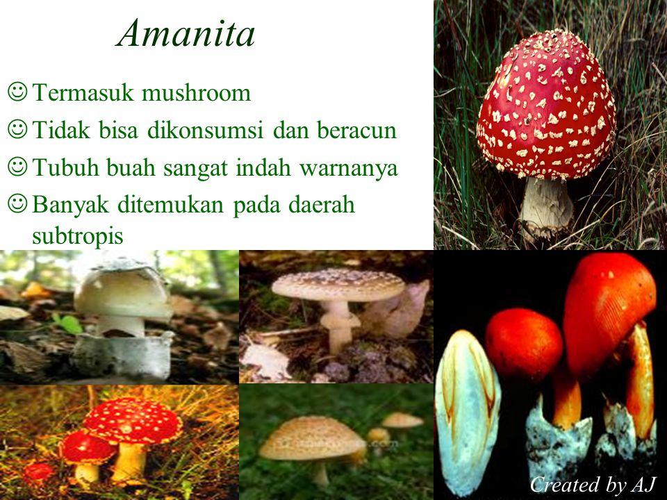 Amanita Termasuk mushroom Tidak bisa dikonsumsi dan beracun Tubuh buah sangat indah warnanya Banyak ditemukan pada daerah subtropis Created by AJ