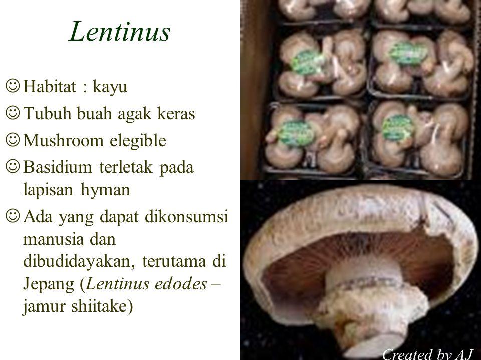 Lentinus Habitat : kayu Tubuh buah agak keras Mushroom elegible Basidium terletak pada lapisan hyman Ada yang dapat dikonsumsi manusia dan dibudidayakan, terutama di Jepang (Lentinus edodes – jamur shiitake) Created by AJ