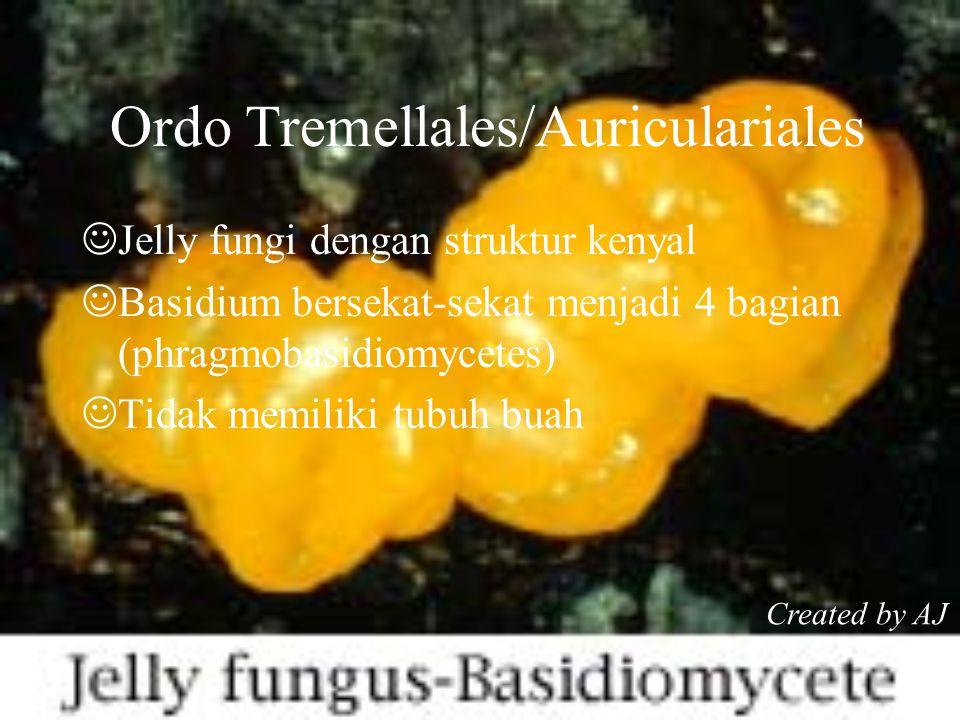Ordo Tremellales/Auriculariales Jelly fungi dengan struktur kenyal Basidium bersekat-sekat menjadi 4 bagian (phragmobasidiomycetes) Tidak memiliki tubuh buah Created by AJ