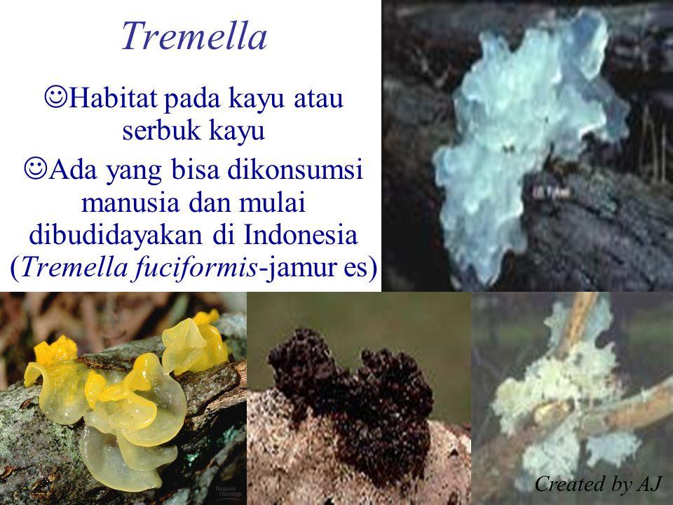 Tremella Habitat pada kayu atau serbuk kayu Ada yang bisa dikonsumsi manusia dan mulai dibudidayakan di Indonesia (Tremella fuciformis-jamur es) Created by AJ