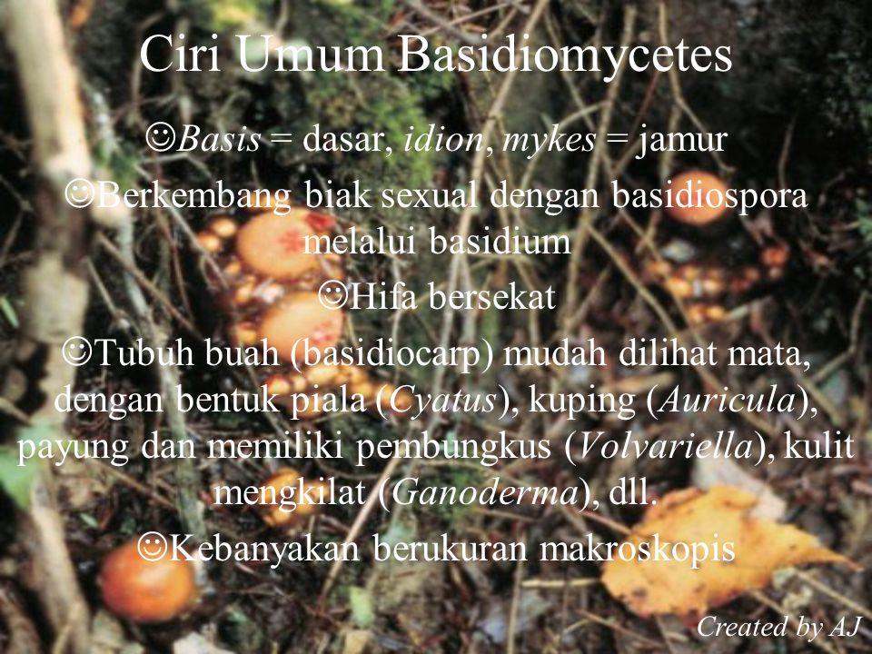Ciri Umum Basidiomycetes Basis = dasar, idion, mykes = jamur Berkembang biak sexual dengan basidiospora melalui basidium Hifa bersekat Tubuh buah (basidiocarp) mudah dilihat mata, dengan bentuk piala (Cyatus), kuping (Auricula), payung dan memiliki pembungkus (Volvariella), kulit mengkilat (Ganoderma), dll.