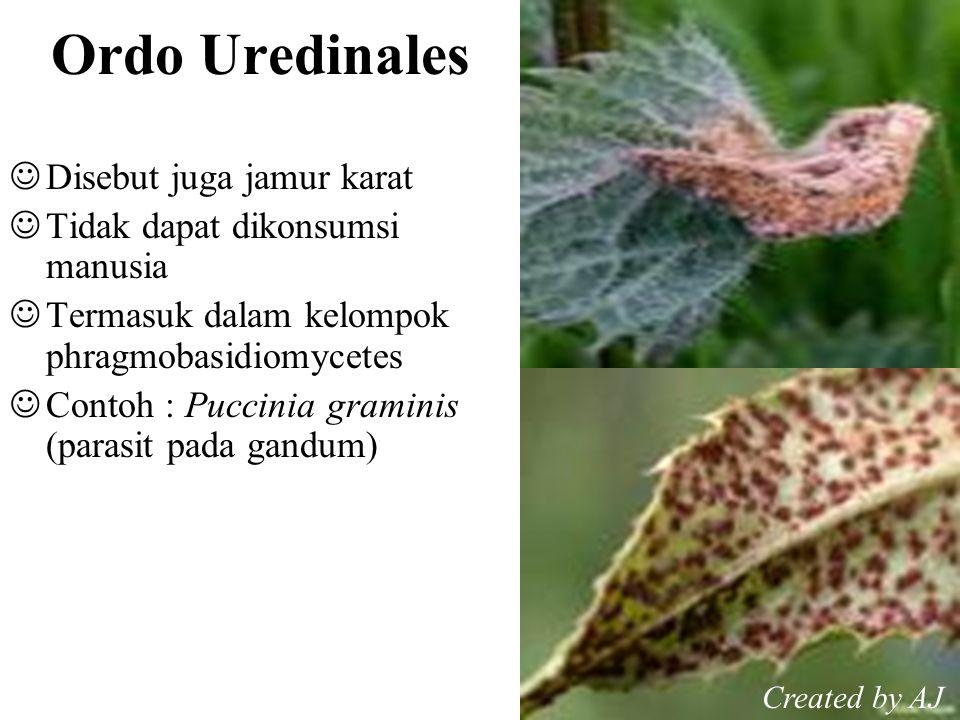Ordo Uredinales Disebut juga jamur karat Tidak dapat dikonsumsi manusia Termasuk dalam kelompok phragmobasidiomycetes Contoh : Puccinia graminis (parasit pada gandum) Created by AJ