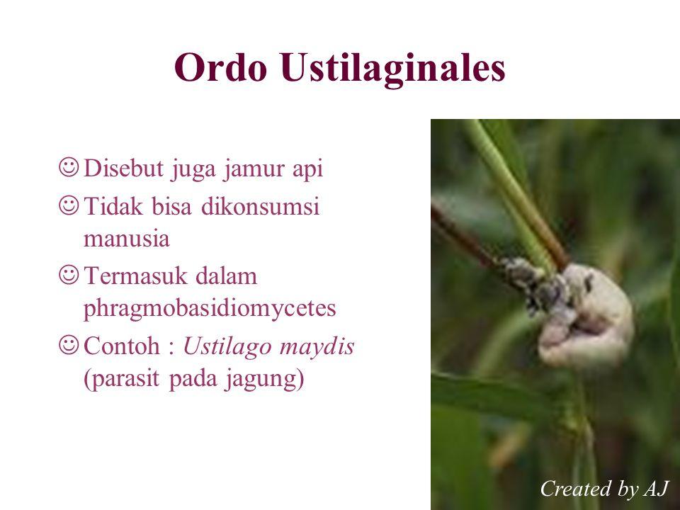 Ordo Ustilaginales Disebut juga jamur api Tidak bisa dikonsumsi manusia Termasuk dalam phragmobasidiomycetes Contoh : Ustilago maydis (parasit pada jagung) Created by AJ