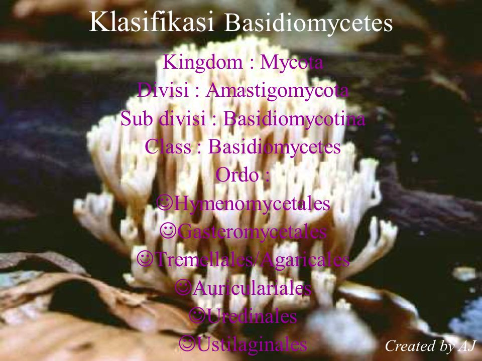 Klasifikasi Basidiomycetes Kingdom : Mycota Divisi : Amastigomycota Sub divisi : Basidiomycotina Class : Basidiomycetes Ordo : Hymenomycetales Gasteromycetales Tremellales/Agaricales Auriculariales Uredinales Ustilaginales Created by AJ