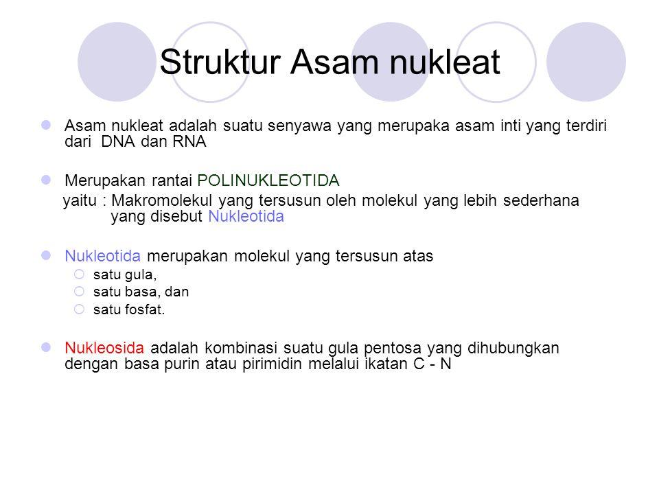 Struktur Asam nukleat Asam nukleat adalah suatu senyawa yang merupaka asam inti yang terdiri dari DNA dan RNA Merupakan rantai POLINUKLEOTIDA yaitu :