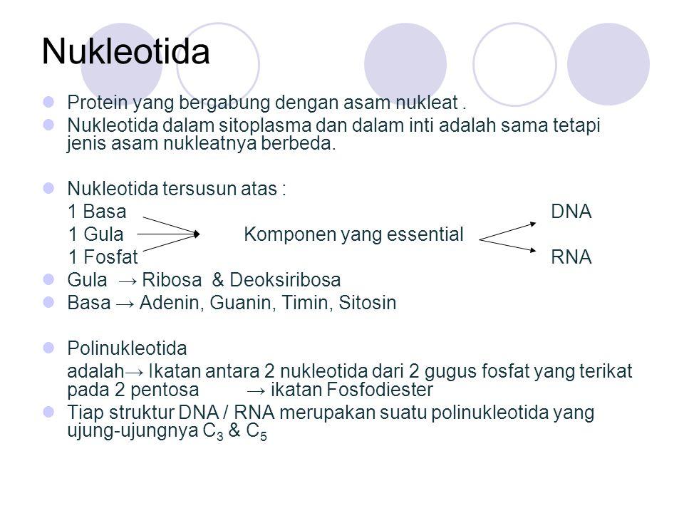 Nukleotida Protein yang bergabung dengan asam nukleat. Nukleotida dalam sitoplasma dan dalam inti adalah sama tetapi jenis asam nukleatnya berbeda. Nu