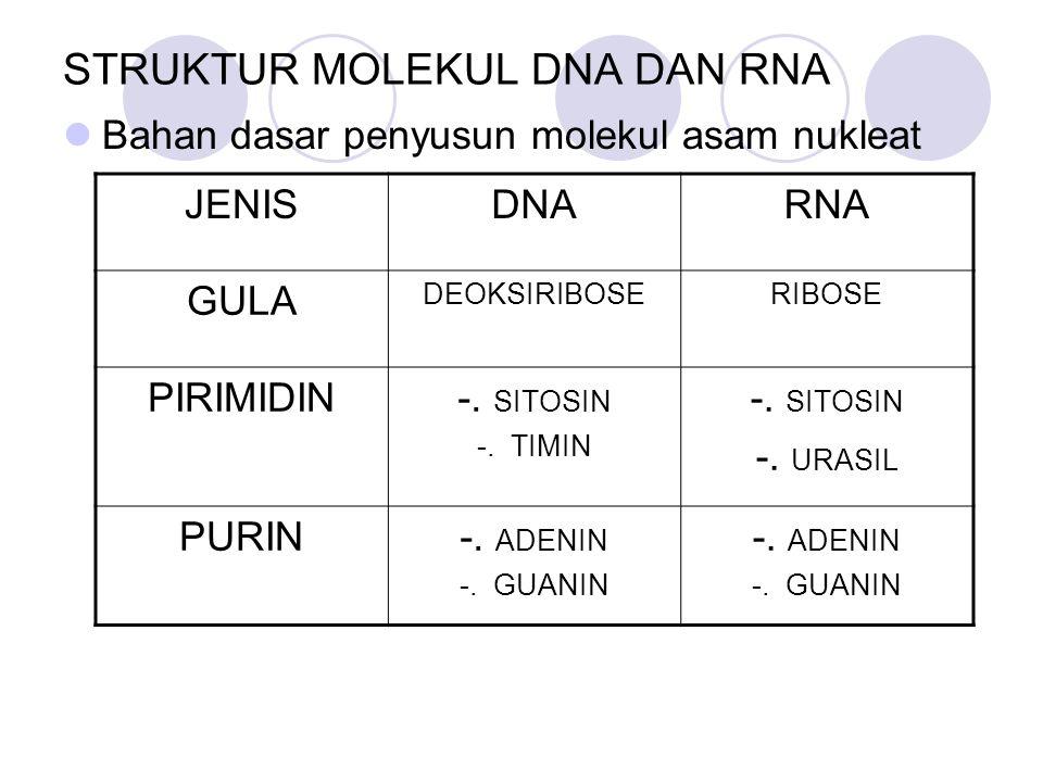 STRUKTUR MOLEKUL DNA DAN RNA Bahan dasar penyusun molekul asam nukleat JENISDNARNA GULA DEOKSIRIBOSERIBOSE PIRIMIDIN-. SITOSIN -. TIMIN -. SITOSIN -.