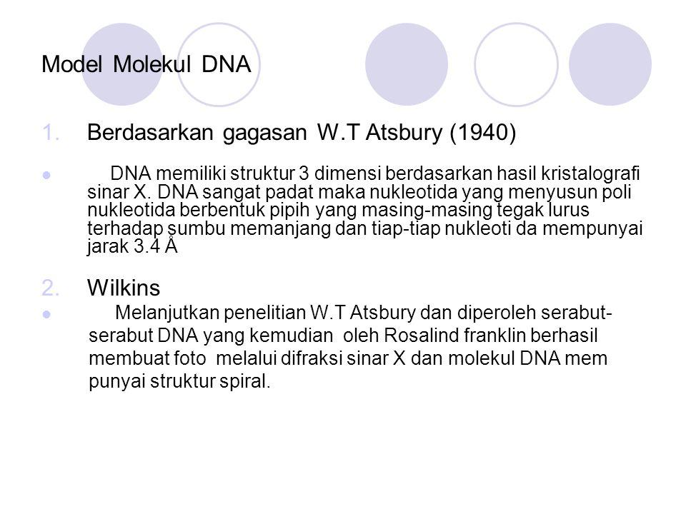 Model Molekul DNA 1.Berdasarkan gagasan W.T Atsbury (1940) DNA memiliki struktur 3 dimensi berdasarkan hasil kristalografi sinar X. DNA sangat padat m