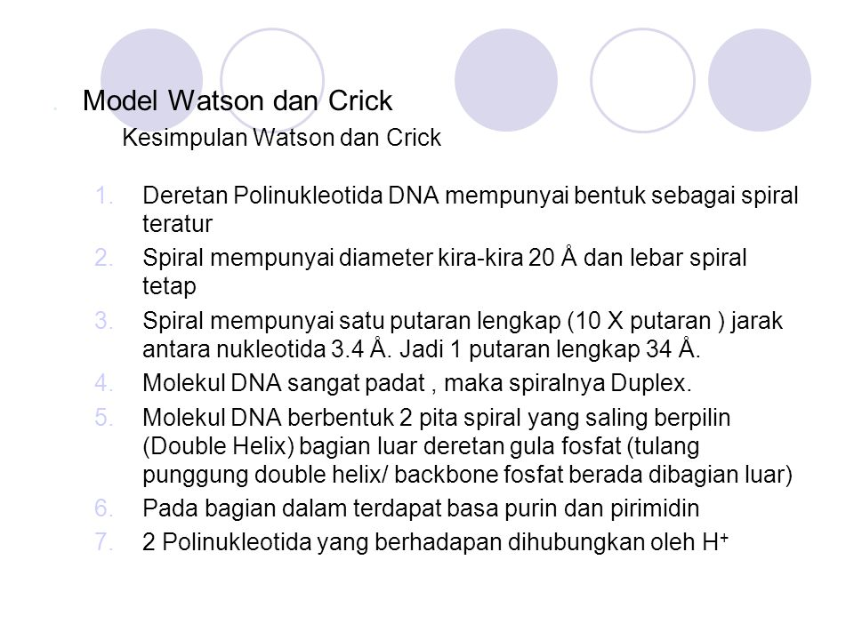 . Model Watson dan Crick Kesimpulan Watson dan Crick 1.Deretan Polinukleotida DNA mempunyai bentuk sebagai spiral teratur 2.Spiral mempunyai diameter