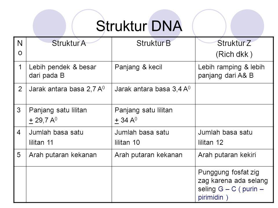 Struktur DNA NoNo Struktur AStruktur BStruktur Z (Rich dkk ) 1Lebih pendek & besar dari pada B Panjang & kecilLebih ramping & lebih panjang dari A& B