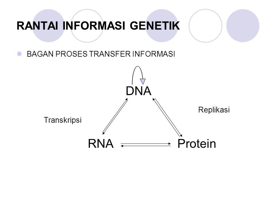 RANTAI INFORMASI GENETIK BAGAN PROSES TRANSFER INFORMASI DNA Replikasi Transkripsi RNA Protein