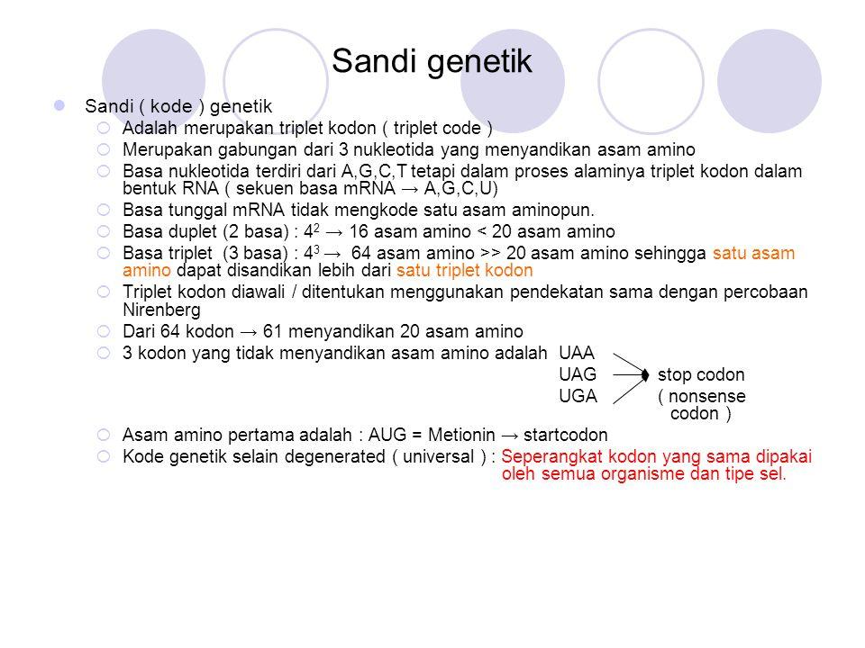 Sandi genetik Sandi ( kode ) genetik  Adalah merupakan triplet kodon ( triplet code )  Merupakan gabungan dari 3 nukleotida yang menyandikan asam am