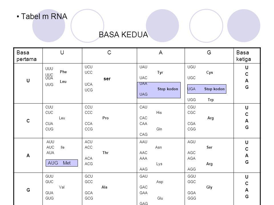 Tabel m RNA BASA KEDUA Basa pertama UCAGBasa ketiga U UUU Phe UUC UUA Leu UUG UCU UCC ser UCA UCG UAU Tyr UAC UAA Stop kodon UAG UGU Cys UGC UGA Stop
