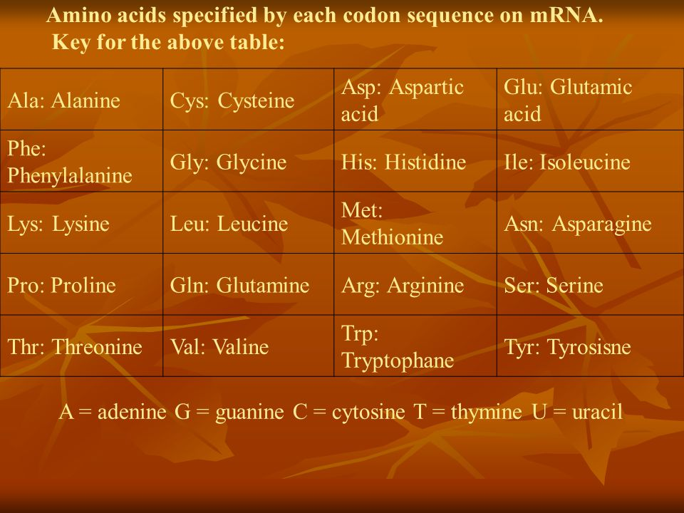 Key for the above table: Ala: Alanine Cys: Cysteine Asp: Aspartic acid Glu: Glutamic acid Phe: Phenylalanine Gly: GlycineHis: Histidine Ile: Isoleucin